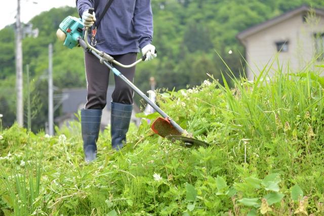 村山市で草刈りに最適な年3回の時期~楽に草刈りを終えるコツまで徹底解説